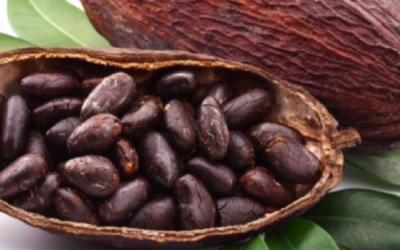 Workshop Cacao Ceremonie